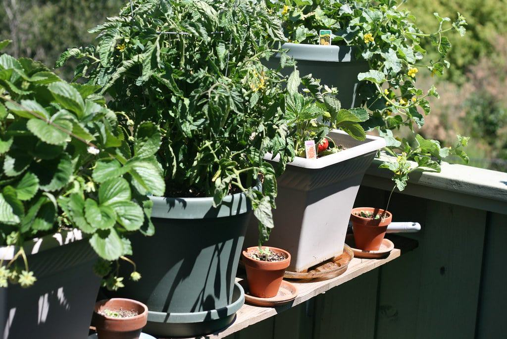 Types of container for gardening