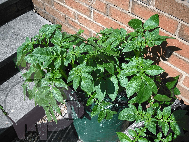 grow bags image