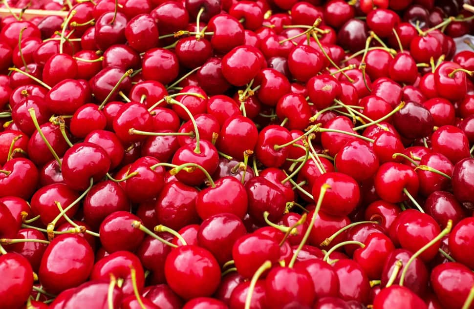 A photo of cherries that haven't been dehydrated yet.