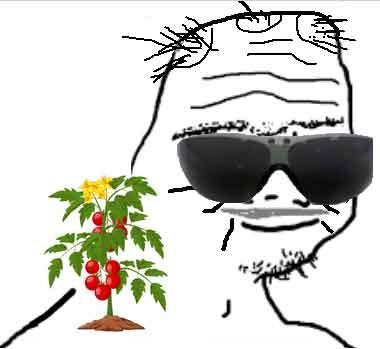 Baby boomer tomato