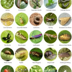 Most common container garden pests