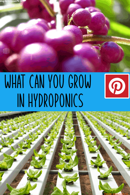 What can you grow in hydroponics pintirest