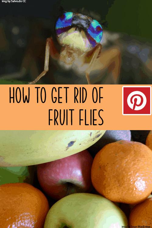 FruitFlyPin
