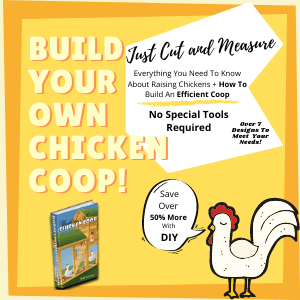 Build your own chicken coop DIY