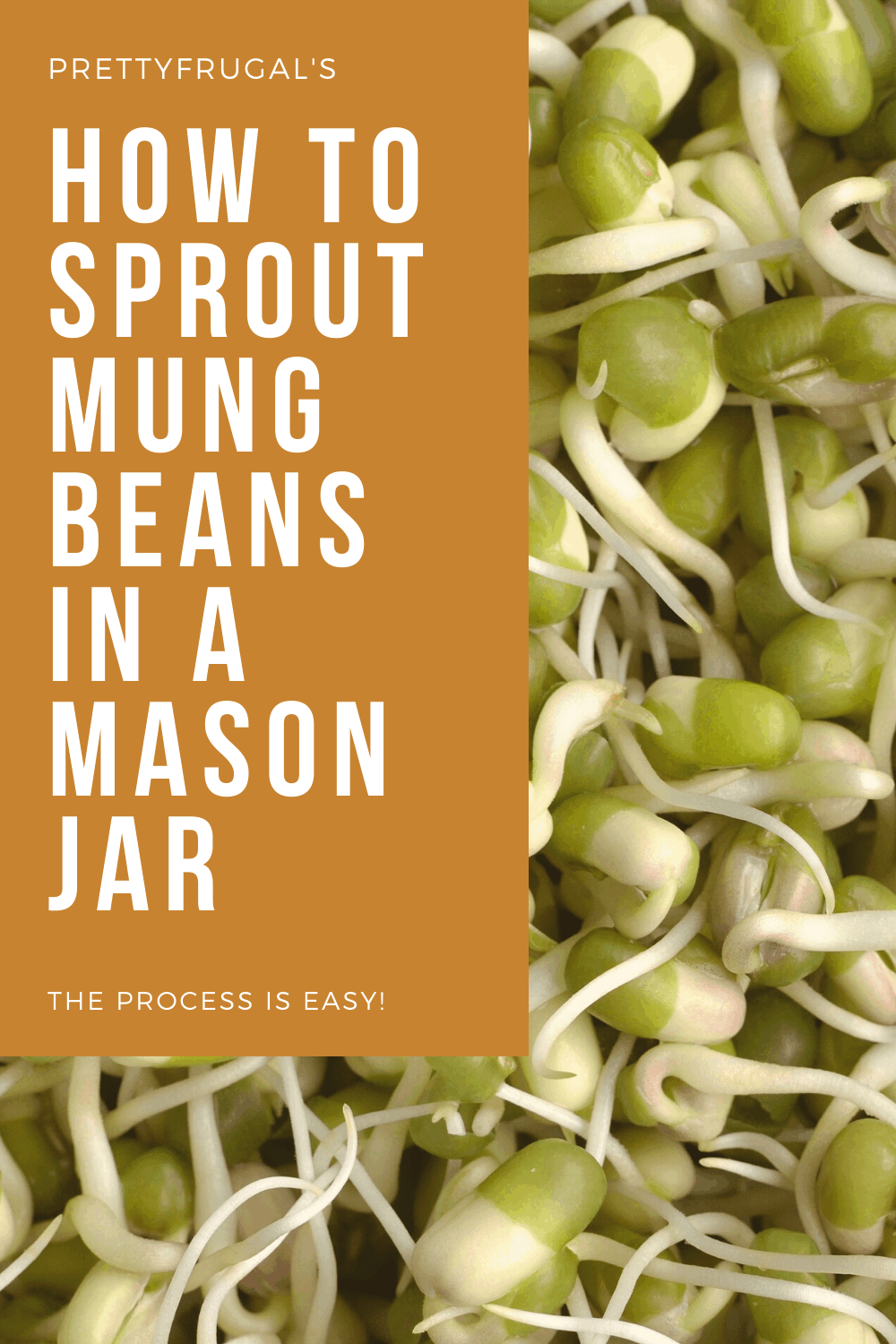 How to sprout mung beans in a mason jar