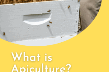 What is Apiculture 1