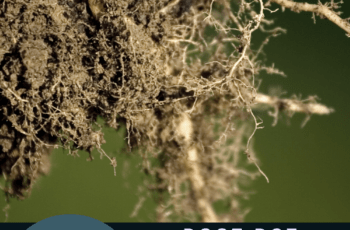 root rot symptoms 1