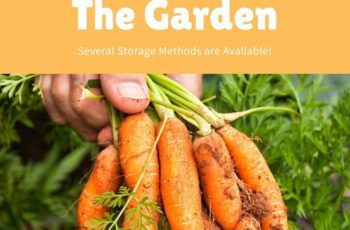 How To Store Carrots From The Garden 1