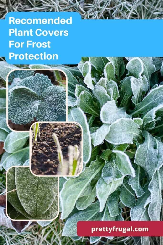 Plant Covers For Frost Protection 1