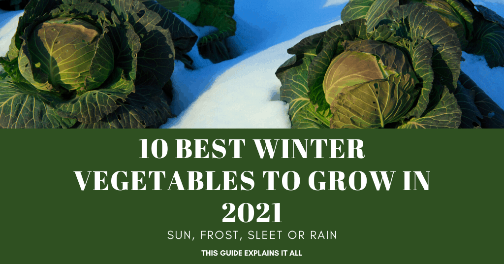 vegetables that grow in winter